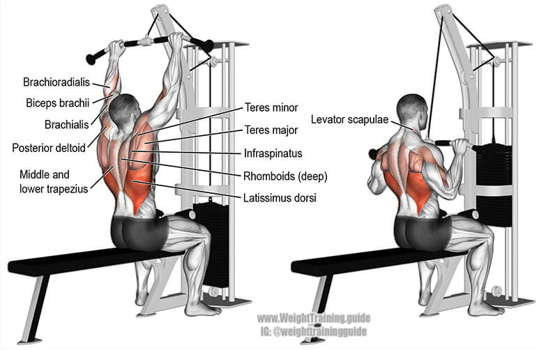lat pulldown muscles used